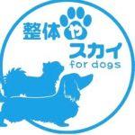 犬の整体 整体やスカイ